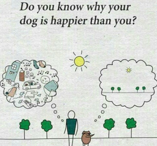 Dog happiness